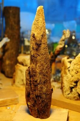 Ecorce de chêne liège ramassée sur la côté méditerranéenne (Mandelieu)